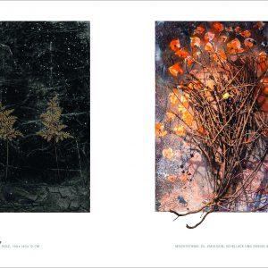 Bilder erzählen von Peter Haller Parkbuchhandlung Buchhandlung Bonn Bad Godesberg
